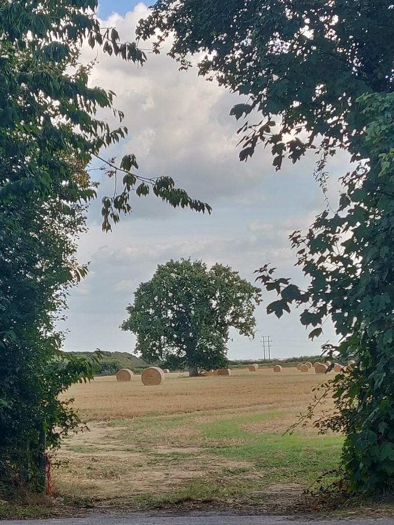 Harvest time by jmdspeedy