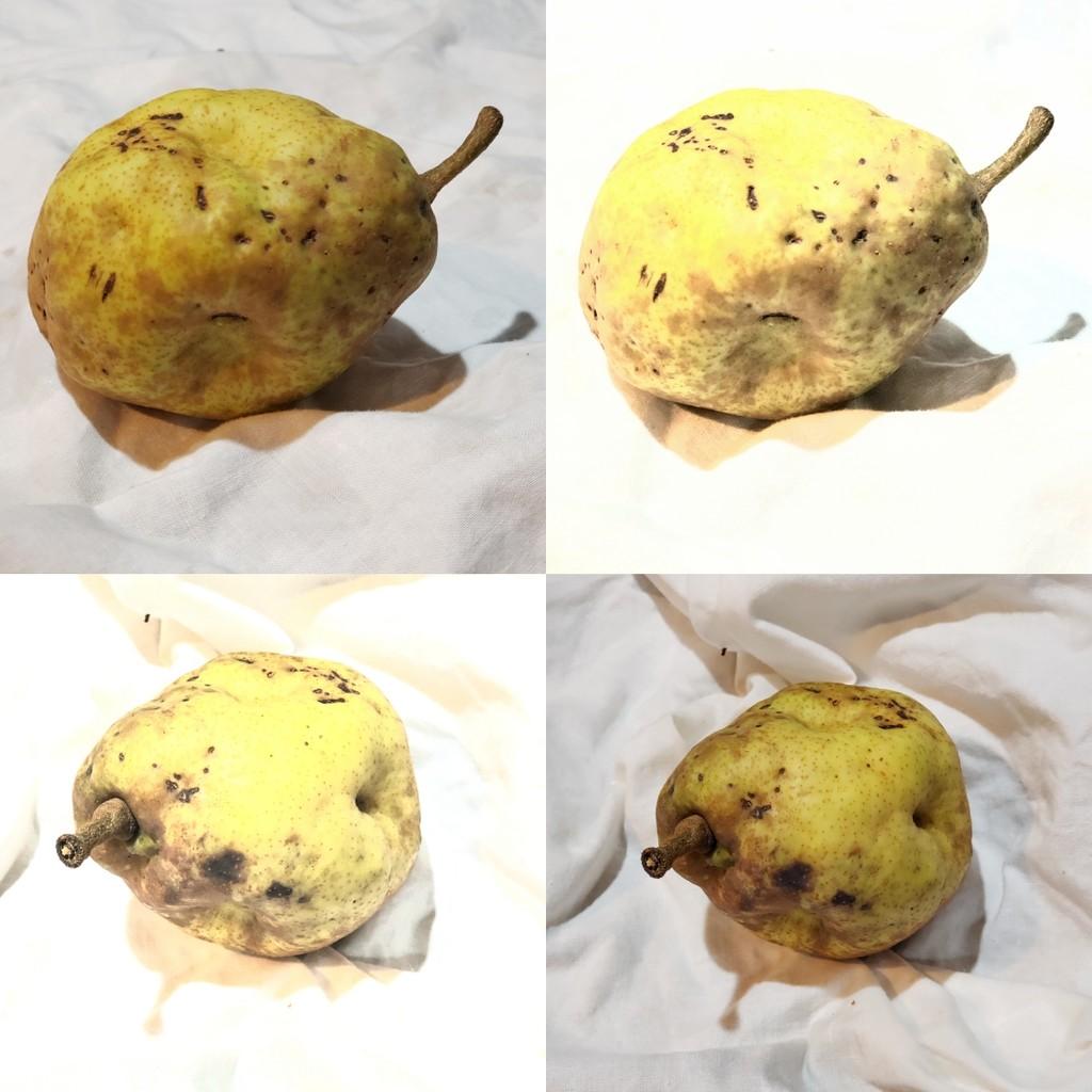 High Key Pear by morrij10