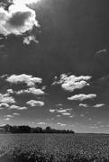 7th Sep 2019 - Corn & Clouds