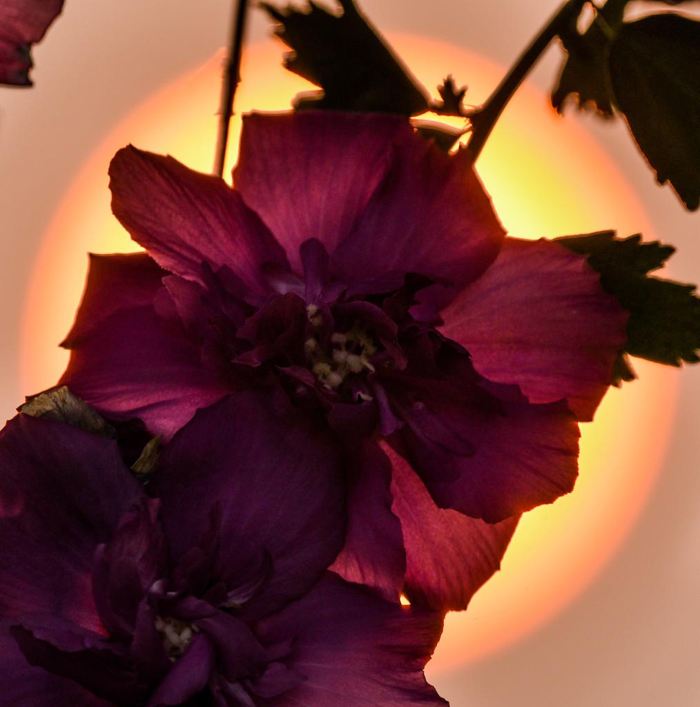 Flower Afire by kareenking