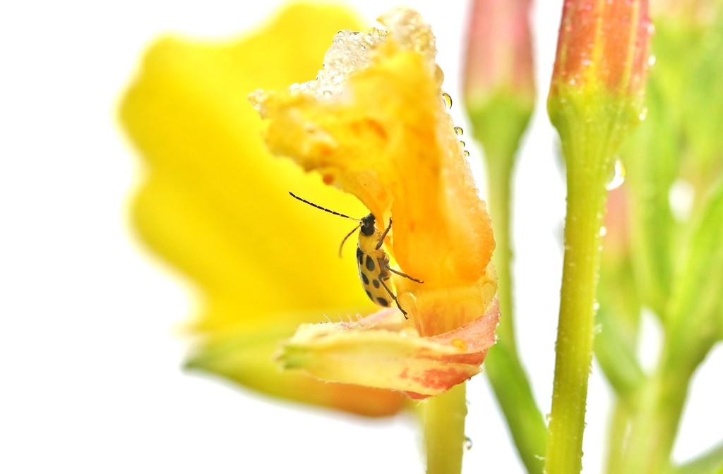 Bug by lynnz