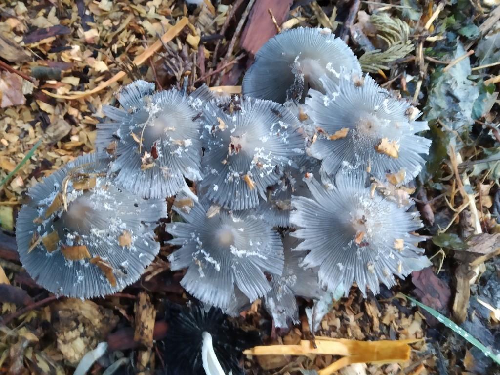 Fascinating fungi  by brennieb