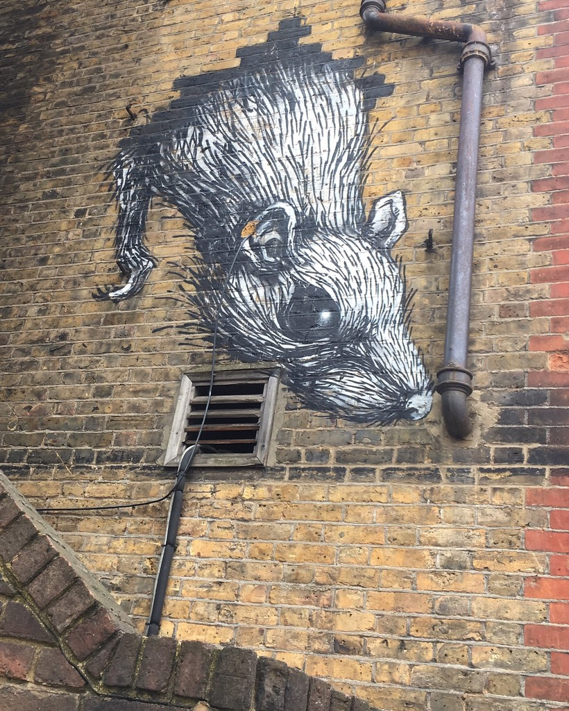 Rattus Rattus by andycoleborn