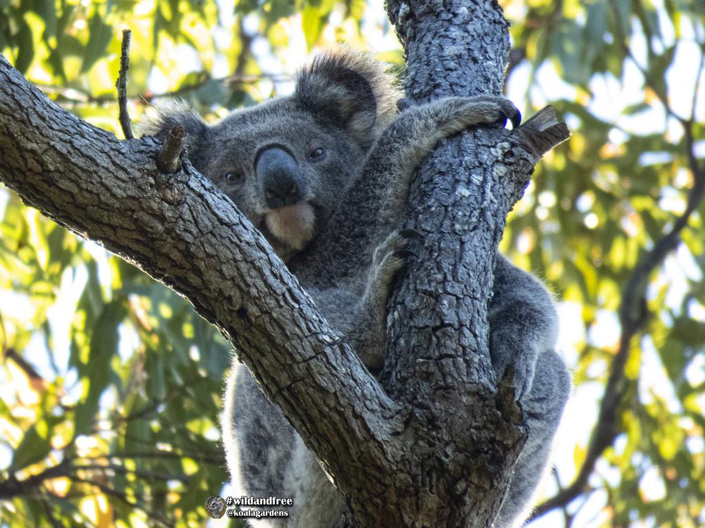 early morning sunlight by koalagardens