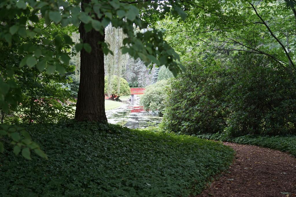 View through the garden by amyk