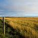 Prairie Field by mgmurray
