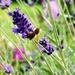 Still chasing bees !!