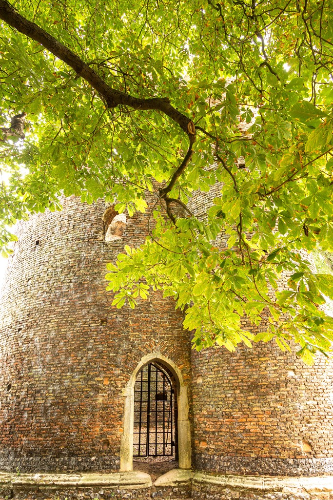 Cow Tower Norwich  by shepherdmanswife