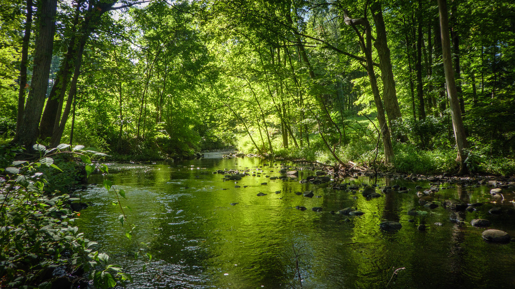 Deep in the woods, at the reservoir. by batfish