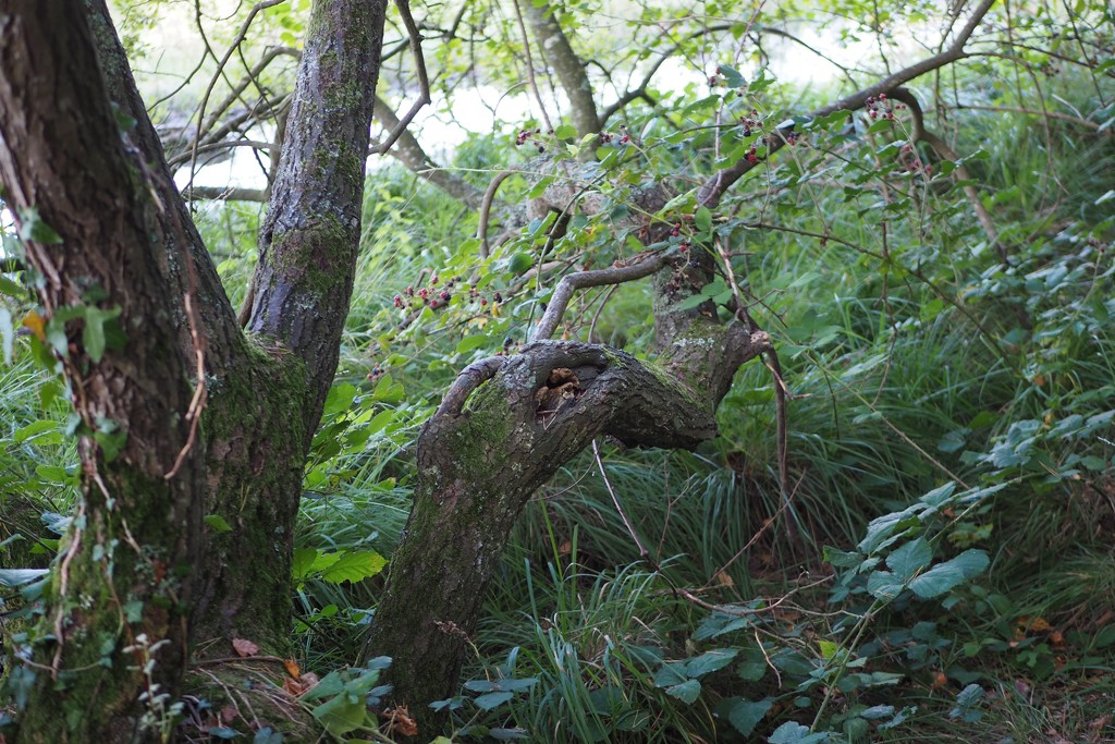 A new arboreal species at Paimpont? by s4sayer