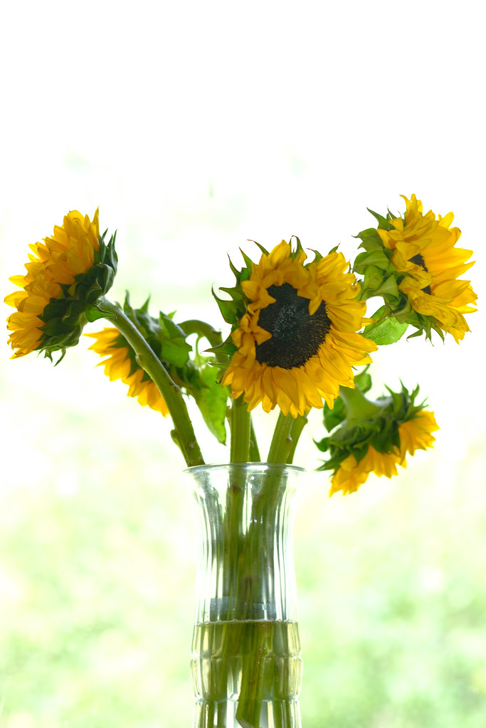 Sunflowers in a Vase by tosee