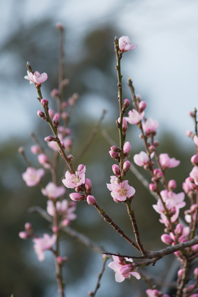 Budding into Bloom by kgolab