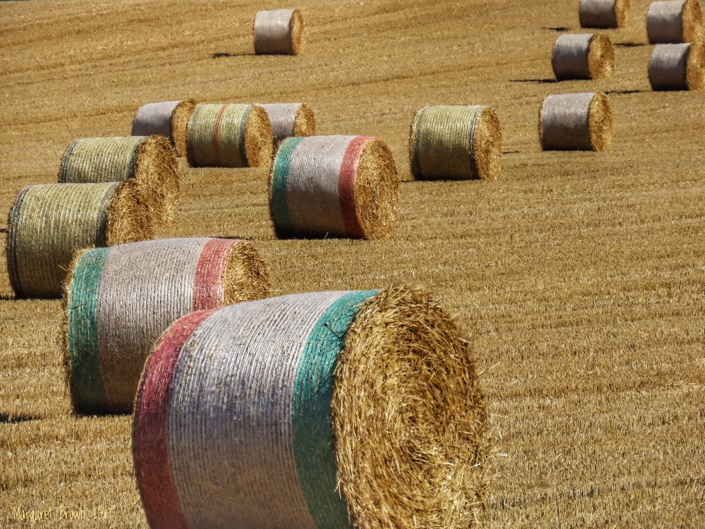 Harvest by craftymeg