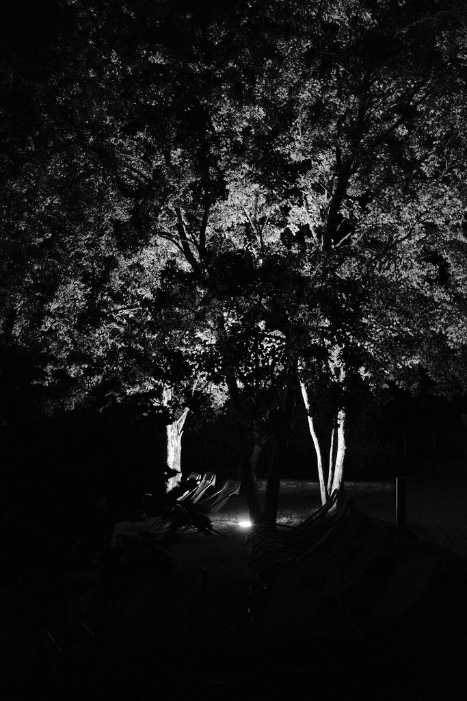 NF-SOOC Day 11: Floodlit Trees by vignouse