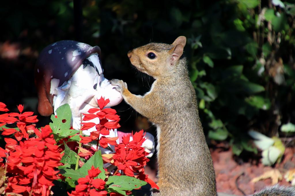 Squirrel meets Grumpy by randy23