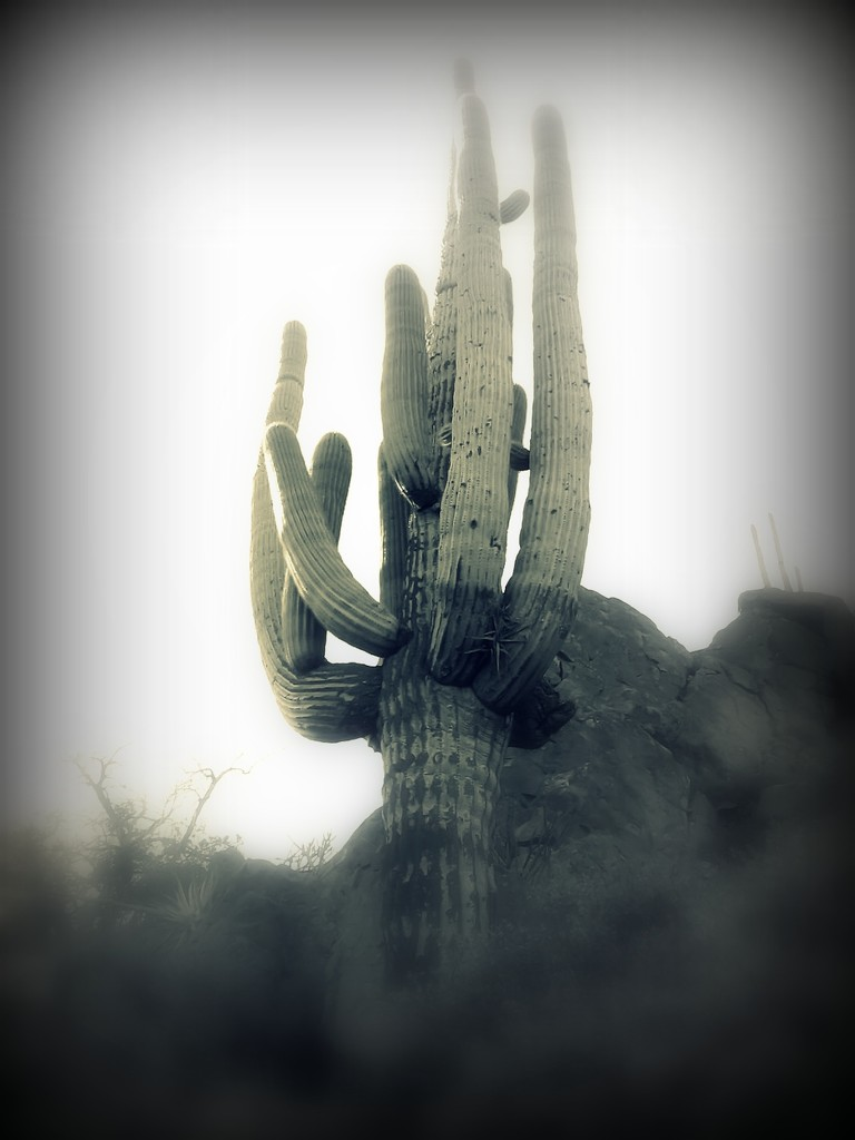 saguaro dreams by blueberry1222