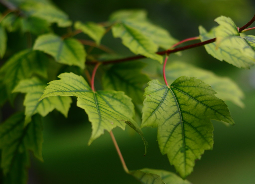 Soft Green by jayberg