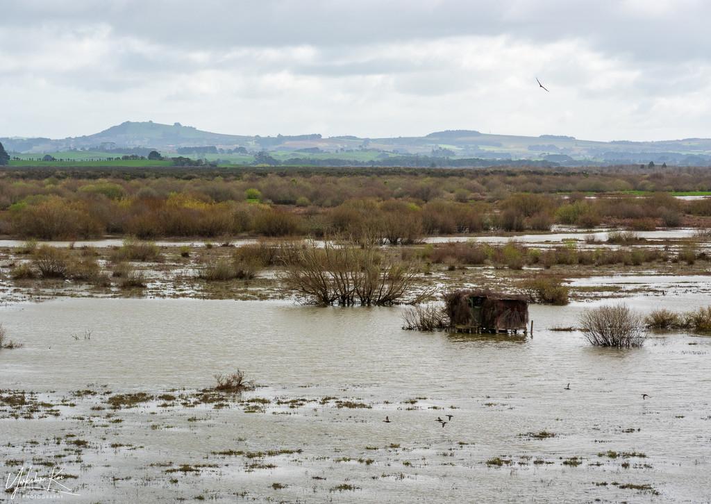Whangamarino Wetlands by yorkshirekiwi