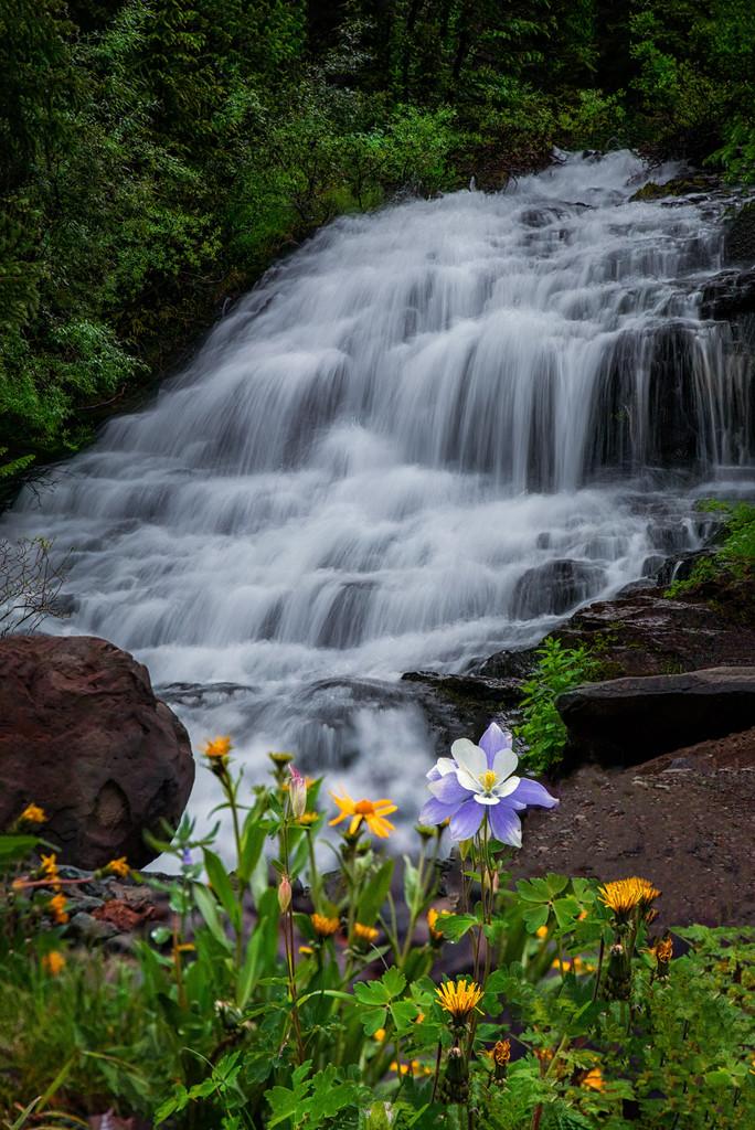 River Columbine by exposure4u