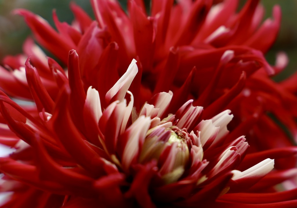 Brilliant Red by carole_sandford