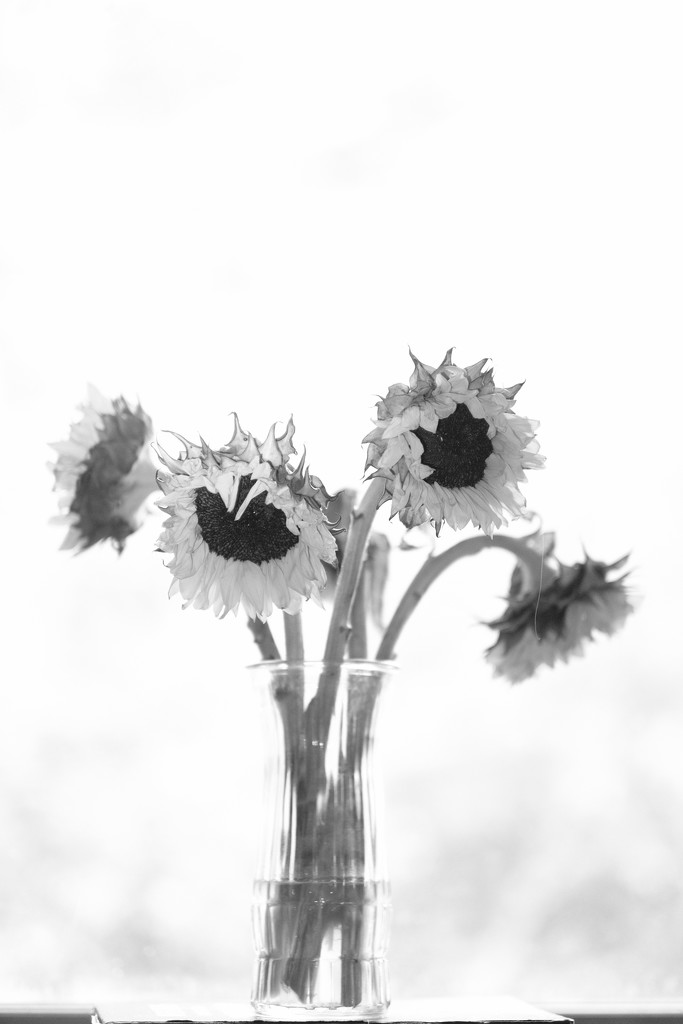 B & W Flowers and Vase by tosee