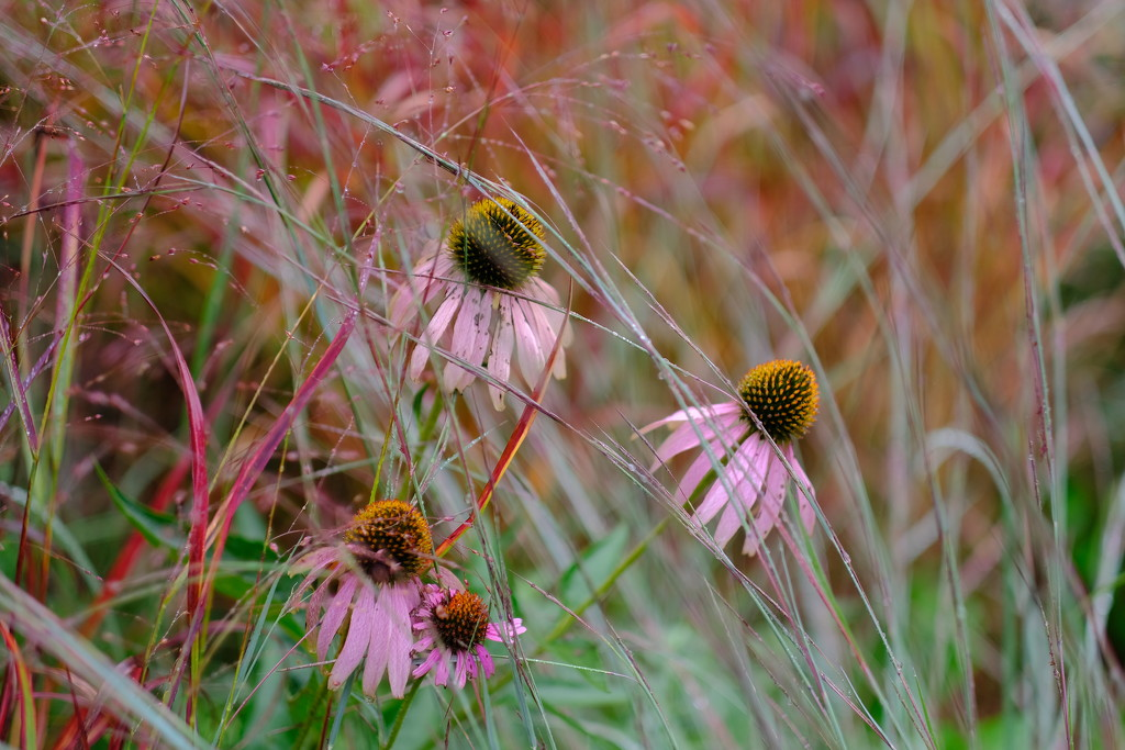 Flowers and Grasses  by tosee