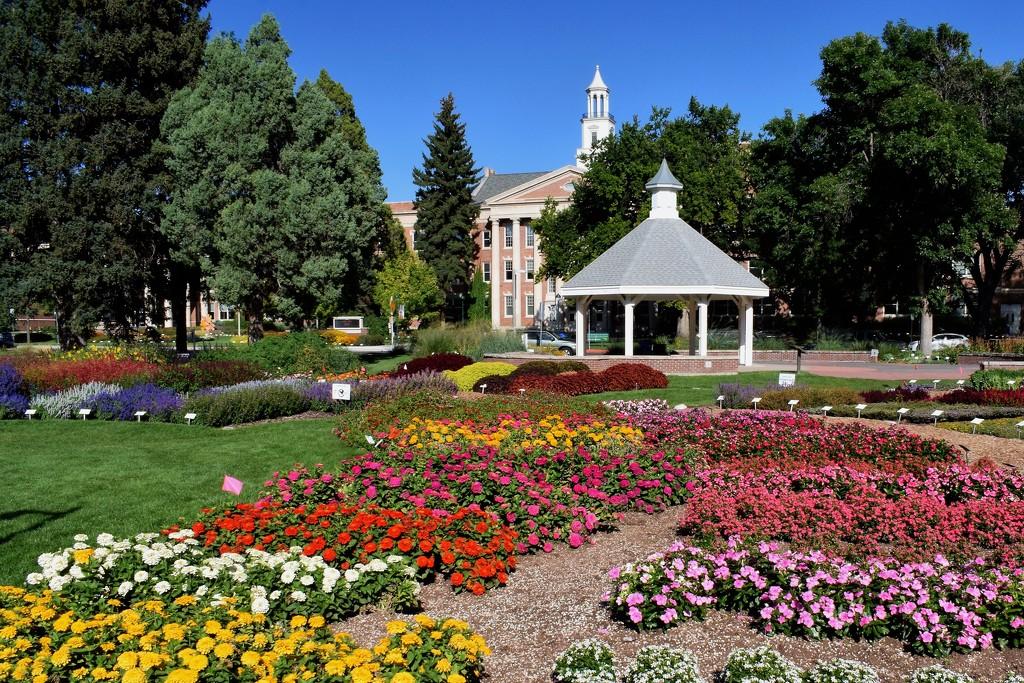 CSU Annual Flower Trial Garden by sandlily