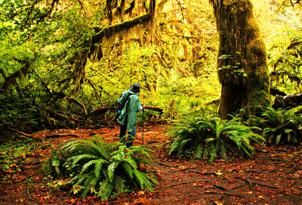 Hoh Rainforest by susanharvey