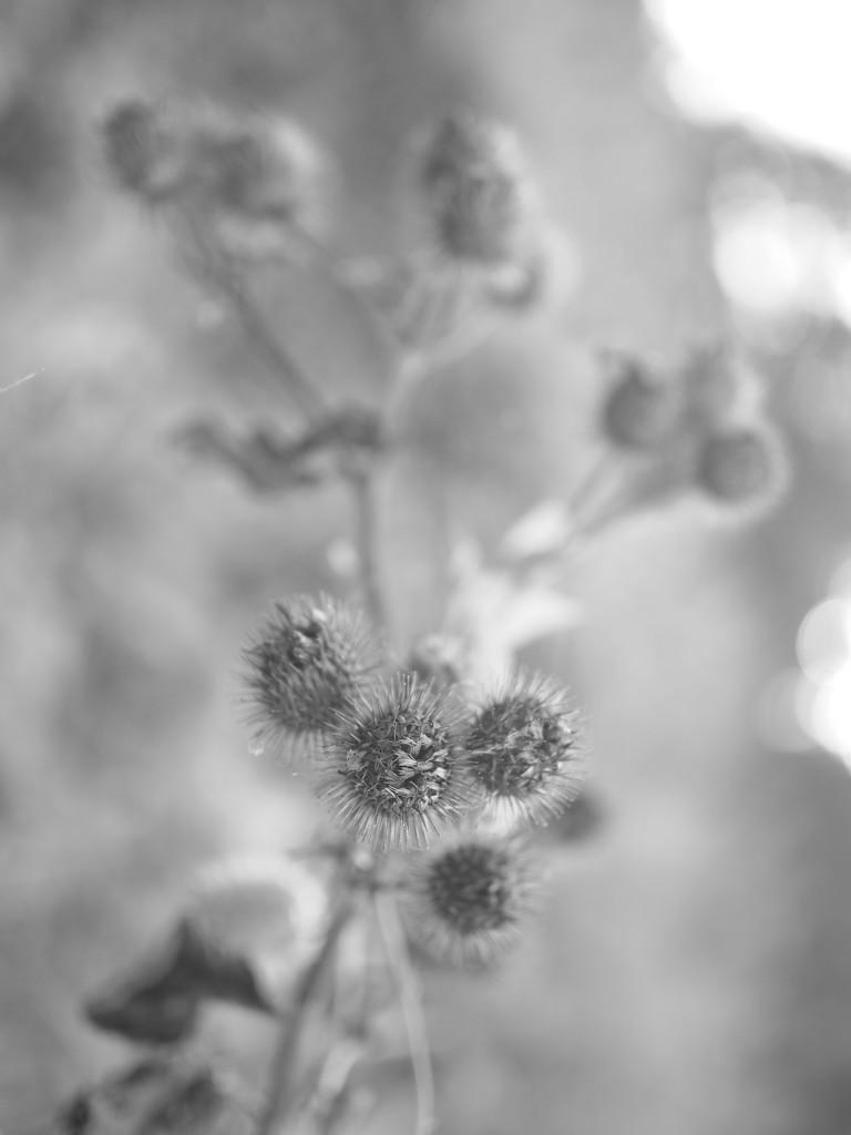 In gray by haskar