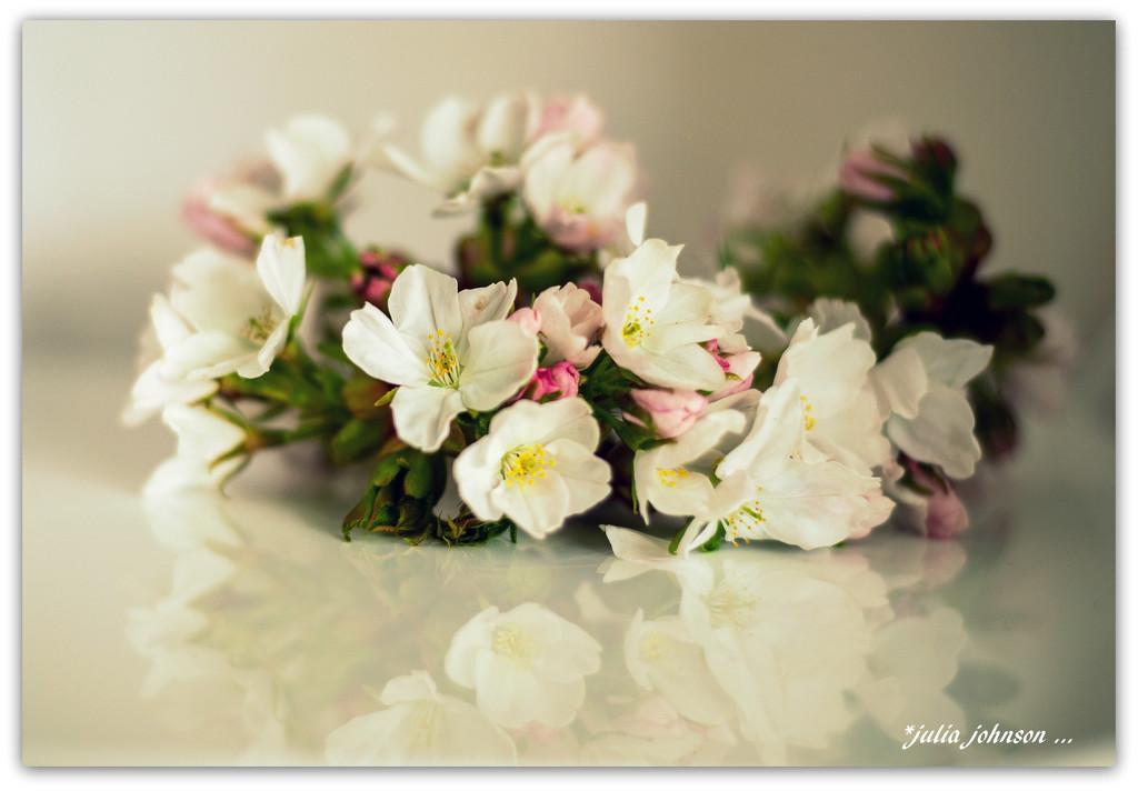 Cherry Blossom .. by julzmaioro