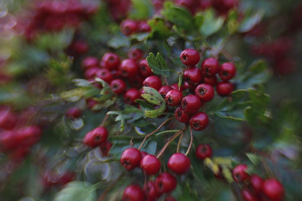 Bursting With Berries by motherjane