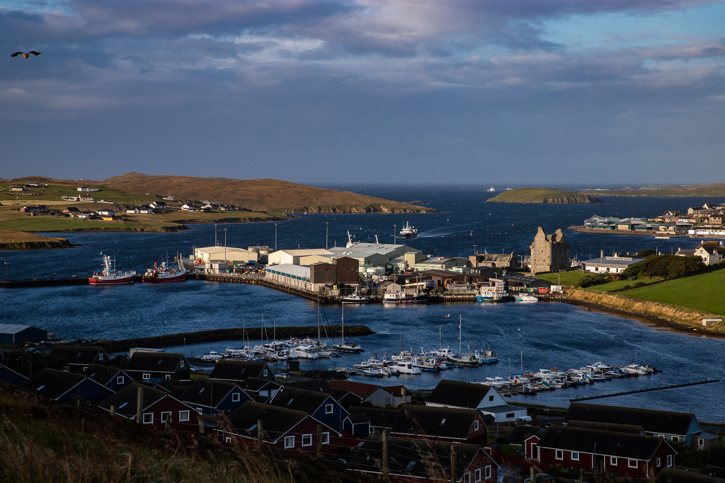 Scalloway Harbour by lifeat60degrees