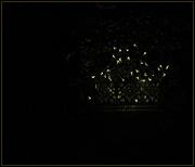 13th Sep 2019 - little light