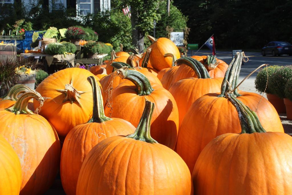 Pumpkins by tdaug80