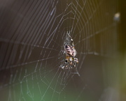 13th Sep 2019 - In the web