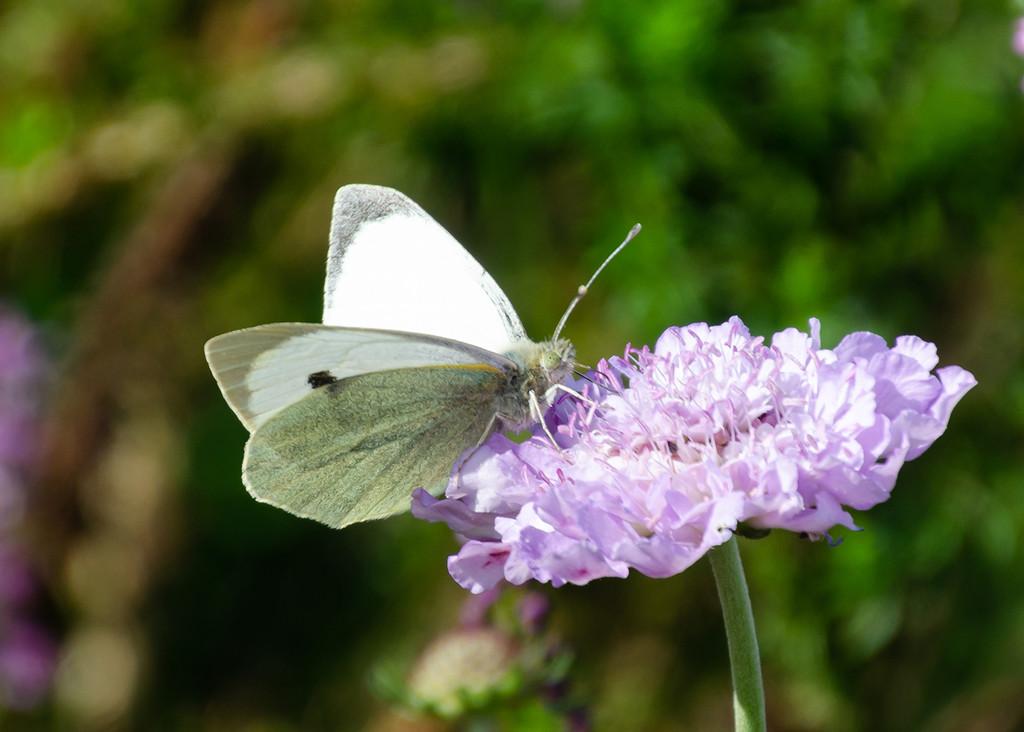 Butterfly by salza