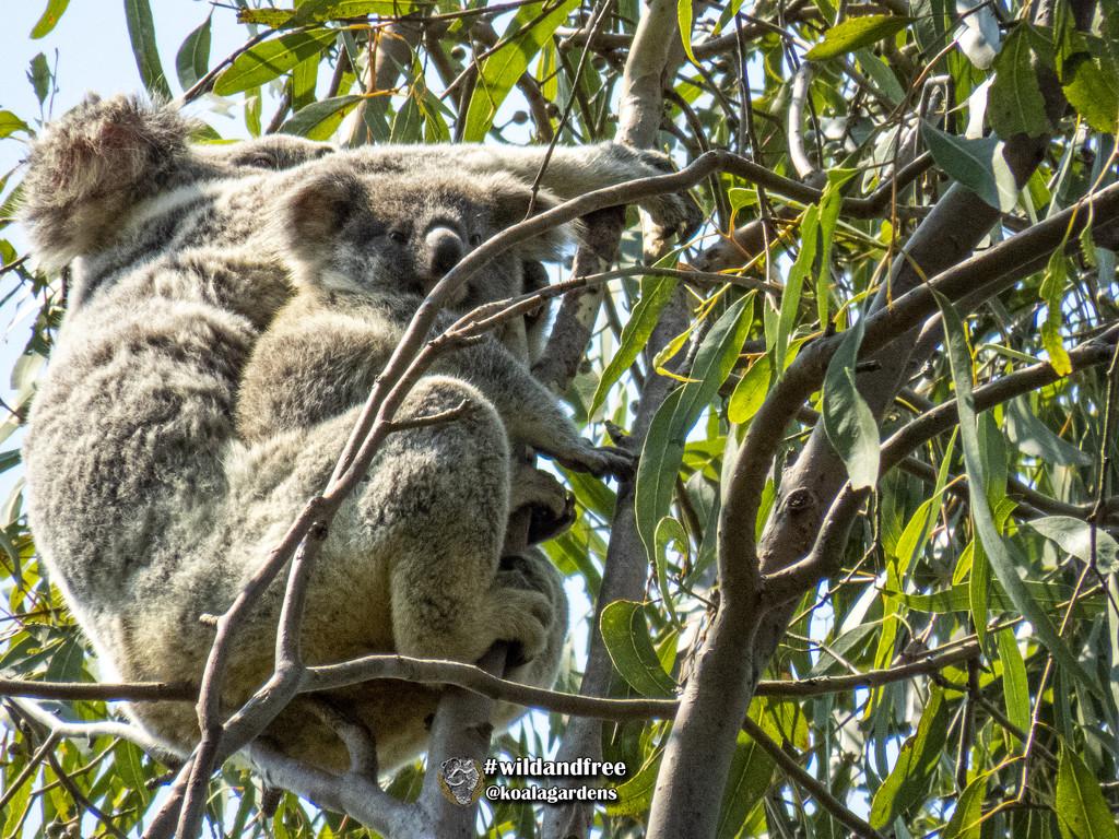 becoming aware by koalagardens