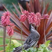 Visitors to my garden - 1