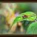 Red Dragonfly on a Green Leaf
