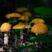 Mushrooms on My Walk by farmreporter