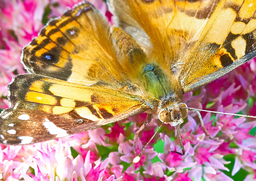 Upclose with a Butterfly by gardencat