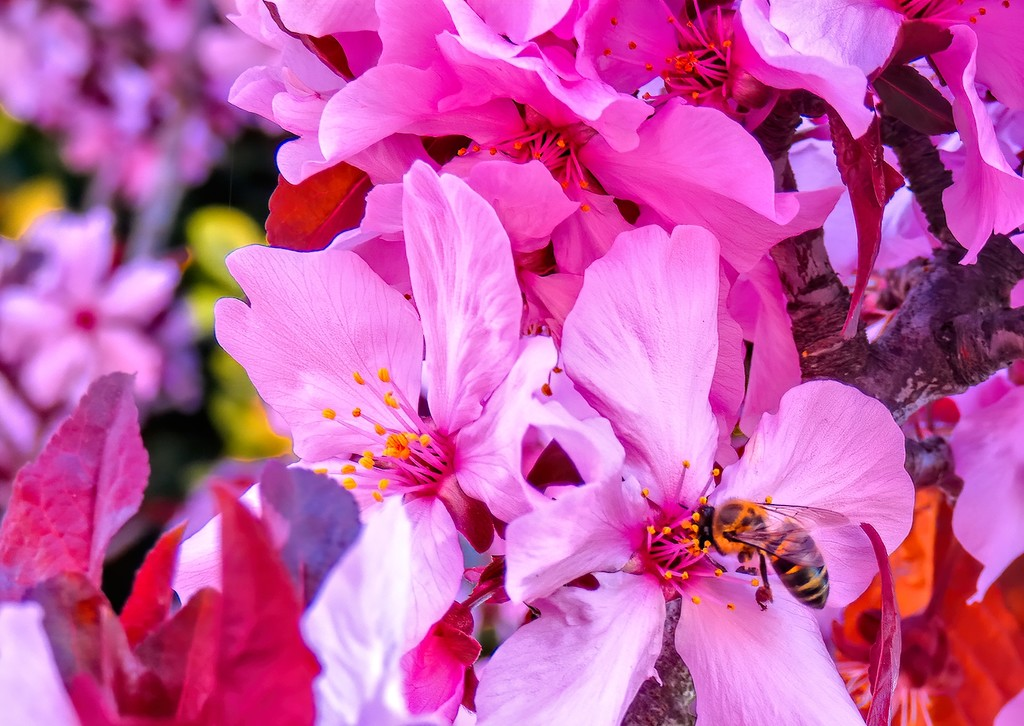 A riot of pink blossoms by ludwigsdiana
