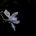 Wet iris
