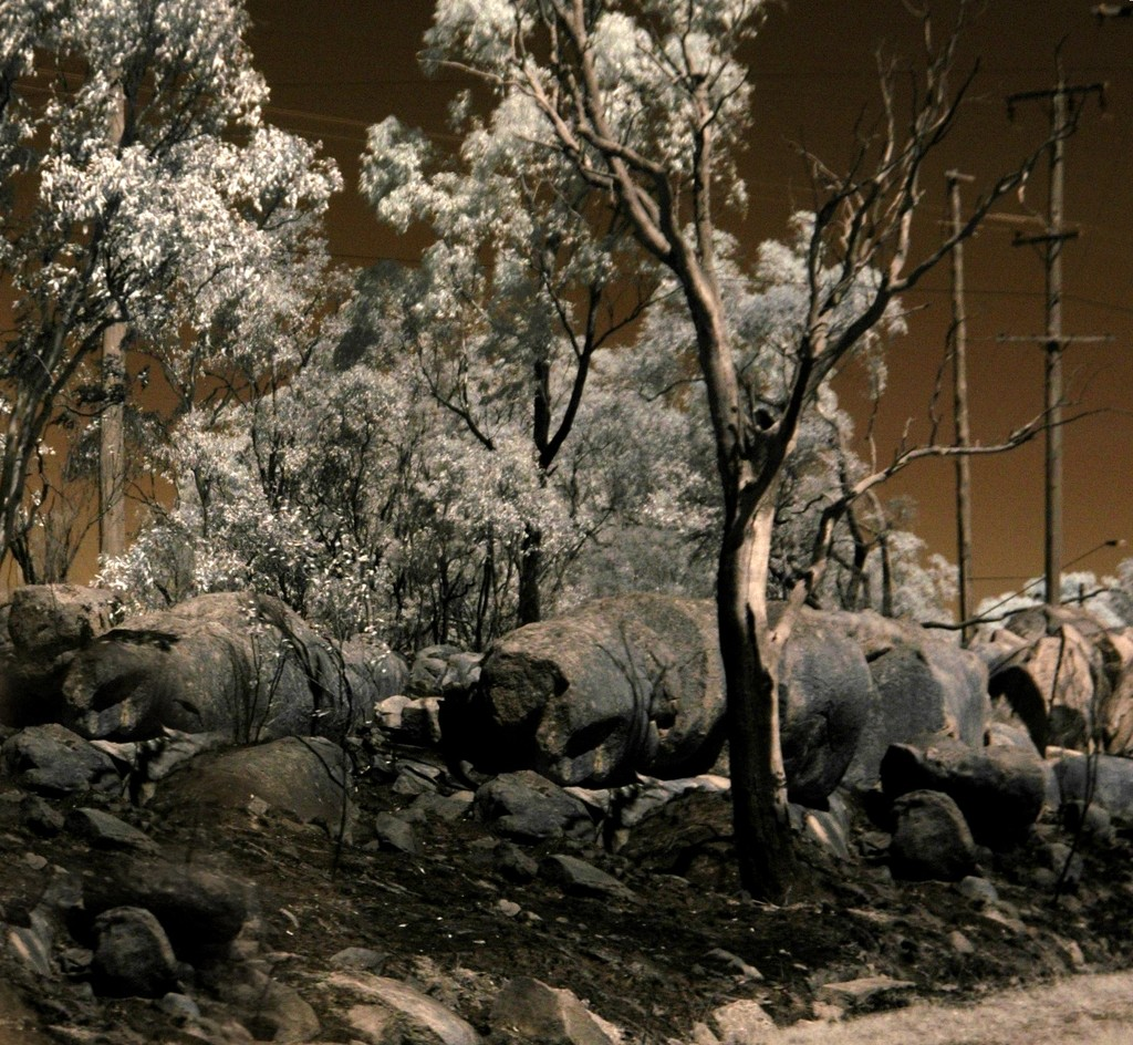 After the fires at Stanthorpe... by robz