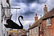 31st Aug 2019 - The Black Swan