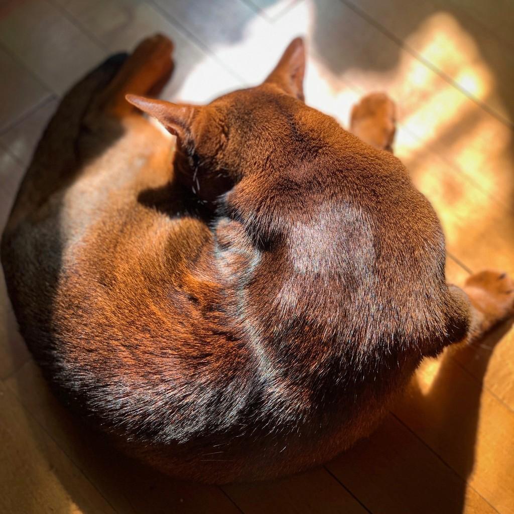 Sunday cinnamon swirl by berelaxed