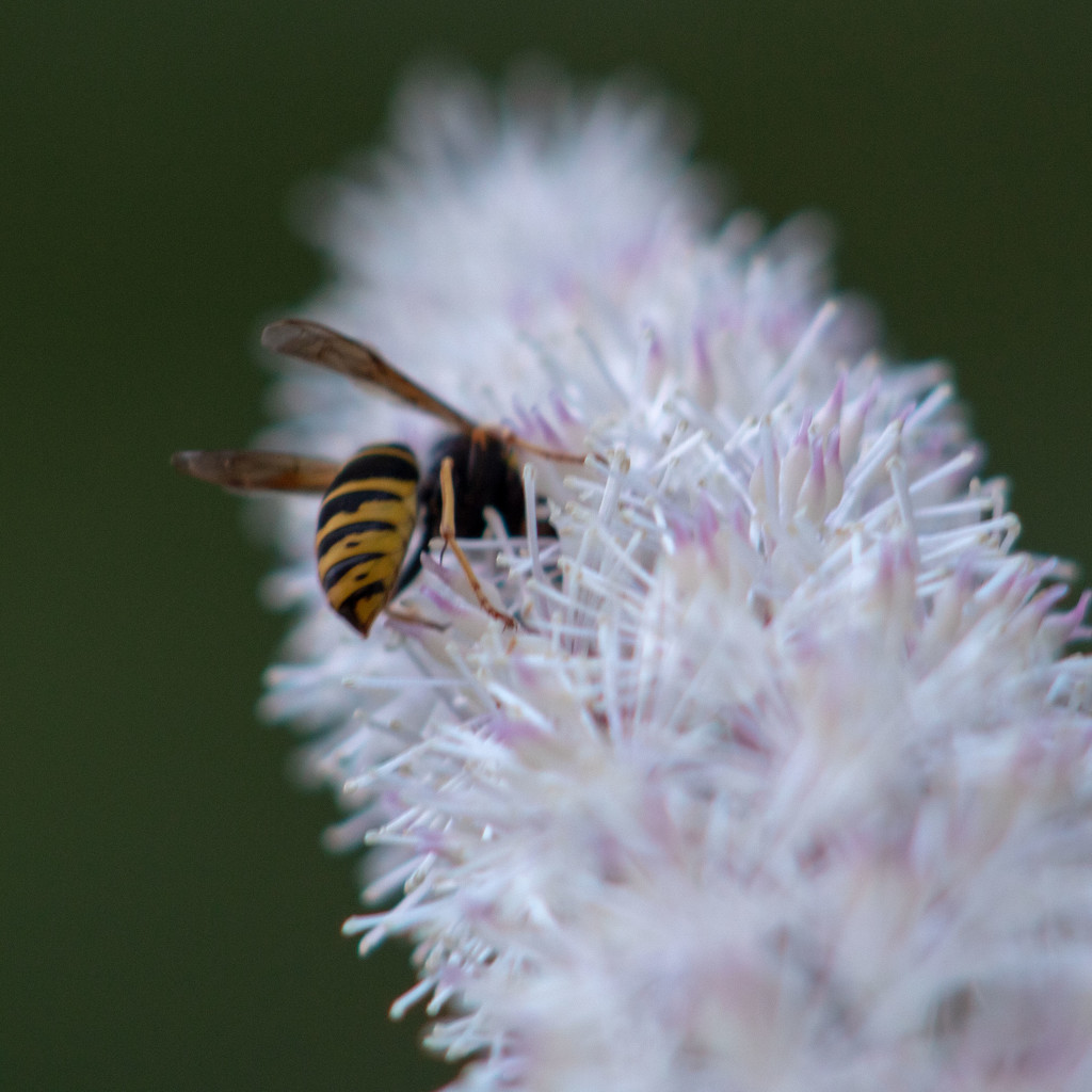 Busy Bee by tdaug80