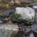Rocks & Water - NF-SOOC