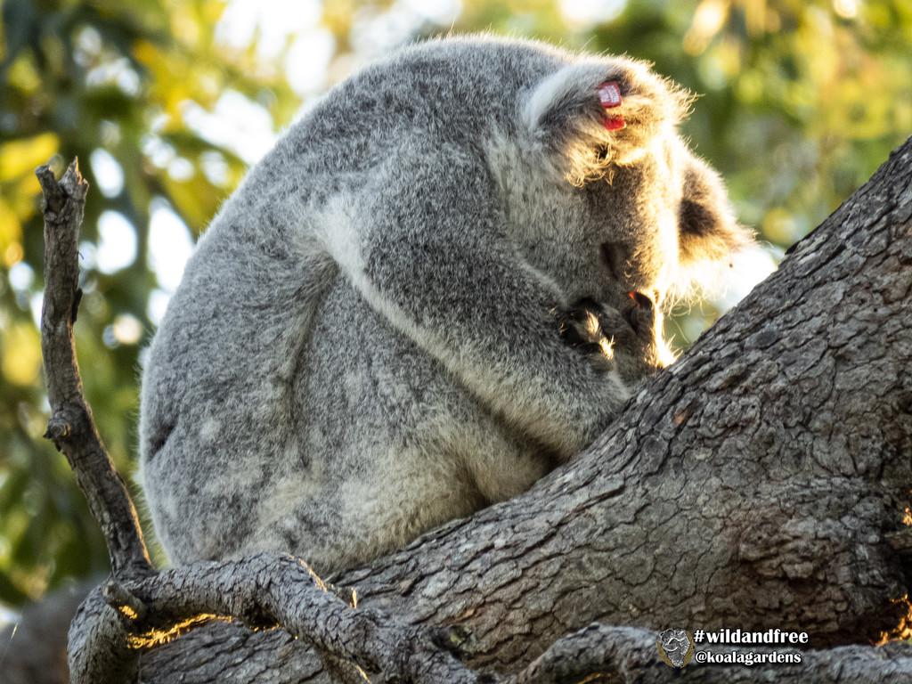 Looking at home already by koalagardens