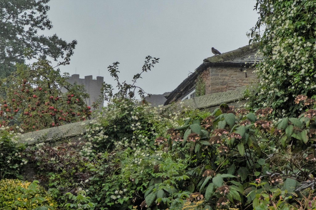 Richmond Castle by sheilaw